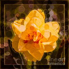 Then my heart with pleasure fills And dances with the daffodils. ~William Wordsworth Yellow Daffodil In An Abstract Garden Painting by Omaste Witkowski Garden Painting, Garden Art, Daffodils William Wordsworth, Framed Prints, Canvas Prints, Art Prints, Flower Show, Art Forms, Beautiful Flowers