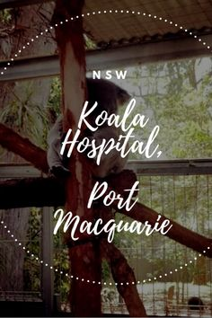 I learned a lot about koalas at the koala hospital in Port Macquarie. Australian Road Trip, Australia Travel Guide, Port Macquarie, Picture Blog, Culture Travel, Plan Your Trip, Travel Around The World, Traveling By Yourself, Travel Inspiration