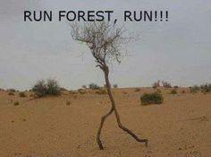 Run Forest, Run!