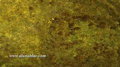 HD Stock Footage Hyper Nature 0111:  Light patterns play on a rippling tide pool (Loop).  http://www.alunablue.com/product/hyper-nature-0111/ https://video.buffer.com/v/562774d5a54892d923afd594