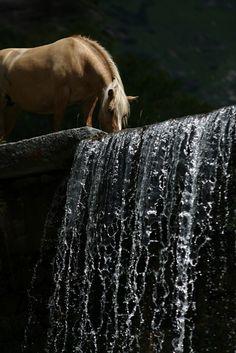 Wild Horse (Beautiful)