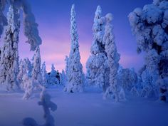 Heavy snow at twilight in Lapland.