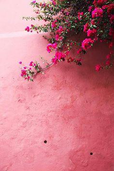 Pink / Via Lejardindeclaire - Bougainvillier Nature Aesthetic, Flower Aesthetic, Pink Aesthetic, Flower Background Wallpaper, Flower Backgrounds, Wallpaper Backgrounds, Aesthetic Iphone Wallpaper, Aesthetic Wallpapers, Murs Roses