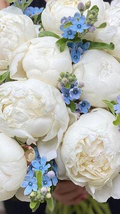 Fresh Flowers, White Flowers, Beautiful Flowers, Sams Club Flowers, Peonies Delivery, White Peonies, Peony Flower, Flower Boxes, Floral Arrangements