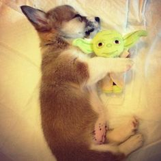 Puppy love #NeverLostAgain