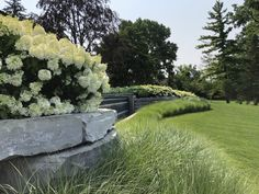 observations of a landscape designer Bobo Hydrangea, Hydrangea Not Blooming, Hydrangeas, Giant Flowers, Large Flowers, Climbing Hydrangea, Faux Grass, Garden Works, Spring Flowering Bulbs