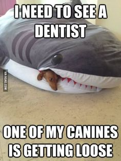 Shark problems