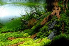 Interview with Cliff Hui #Aquascaping Artist