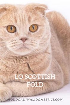 Cat Enclosure, Reptile Enclosure, Scottish Fold, Munchkin Cat, French Bulldog Puppies, Reptile Cage, Veterinary Technician, Maine Coon Cats, Exotic Fish
