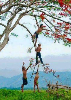 Vietnam (The Eyes of Children Around the World) Kids love to climb trees Village Photography, Children Photography, Nature Photography, Memories Photography, Photography Ideas, Precious Children, Beautiful Children, Art Children, Cool Photos