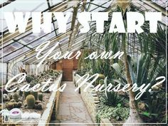 Why Start Your Own Cactus Nursery?  Why not!
