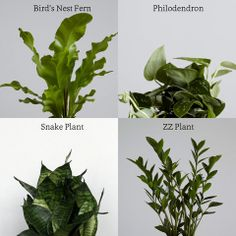 plants for the August