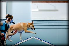 Dog Agility Research: Dog agility is great exercise for the handler!