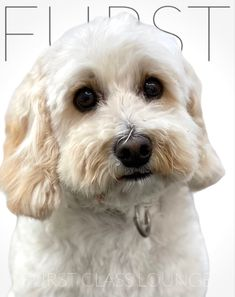 Dog Grooming Salons, Cavapoo, Luxury Spa, Photo Galleries, Gallery, Dogs, Animals, Animales, Roof Rack