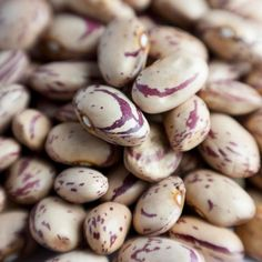 Romano Pole Bean, Heirloom ,Seeds are open pollinated and can be grown, harvested, and replanted endlessly.