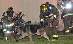 ¡Todo un héroe! Este perro salvó a su familia de un incendio