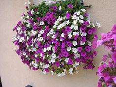 Φυτέψτε κρεμαστά φυτά
