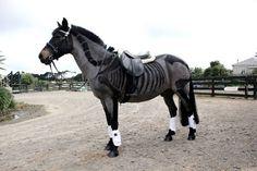 4 Creepy Clips by Greta Alexandra Oskolkov-Schneider | HORSE NATION