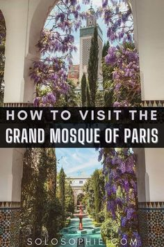 How to Visit the Grande Mosquée de Paris (Paris Mosque), latin quarter, paris, france