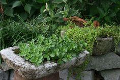 Adair County Garden Club – Hypertufa Planters Garden Art, Garden Club, Papercrete, Plants, Garden, Beautiful Flowers, Garden Sink, Garden Troughs, Hypertufa