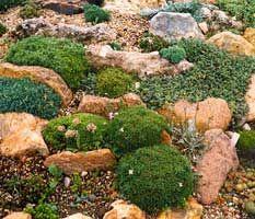 Rocallas. Cómo construir o hacer una rocalla (jardín de rocas), plantas para la construcción jardines de rocalla, creación de rocallas