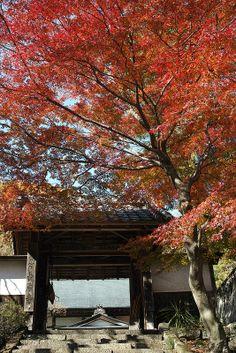 のんくり日和: 紅葉と仏閣はよく似合う