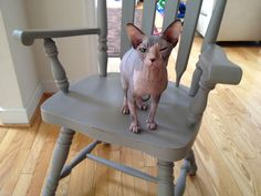 I painted a dining set for a client and their Egyptian hairless cats loved the chairs!