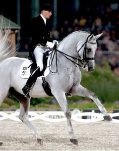 Blue Hors Matine. If you've never seen a horse literally dancing... R.I.P Great horse