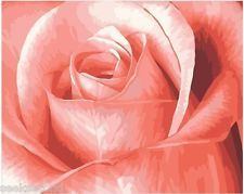 Acrylic Paint by Number Kit 50x40cm (20x16'') the Pink Rose DIY Painting BW7072