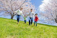 桜の咲く土手を下る4人家族[10567001348] - 写真素材・ストックフォト|アマナイメージズ