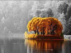 """""""Jég ül a fákon, fagy dala cseng. Csend van a földön, s csend odafent."""" ♥"""