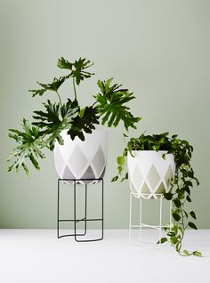 Ivy Muse | Calypso Collection | 'Chameleon' in Black and White | Ivy Muse X Design Twins 'Harlequin Pot' in Grey and Green | Photo: Annette O'Brien Styling: Alana Langan