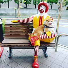 The answer is... Looks very familiar.  Just fitted #shiba#shibe#shibainu#shibainuuni#shibalovers#shibaoftheday#shibastagram#instashiba#lovepets#lovedogs#loveshiba#dog#doge#doglovers#uni#unistagram#dogstagram#instagood#love#tokyo#japan#happyface#unihalo#柴犬#柴犬うに#dogoftheday#うに#うにはろ#MacDonald 病院への往復10キロつきあわせたらお互い撃沈。
