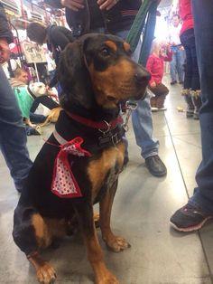 #Lostdog 2-5-15 #Anniston #AL (north) Neutered male # ...