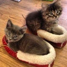 That's one way to keep your slippers warm!  #petstagram #photooftheday #catsofinstagram #ilovemycat #catoftheday #adorable #pets #tagsforlikes #cute #instagood #photooftheday