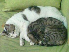Y un recuerdo también para nuestras gatitas Carry y Wendy, madre e hija siempre tan unidas y que lo seguirán estando sin duda en el cielo de los gatos.