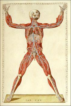 (via Dream Anatomy: Gallery: Bartolomeo Eustachi and Giulio de'Musi: Romanae archetypae tabulae anatomicae novis…)