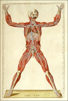 Tab. XXV. [Romanae archetypae tabulae anatomicae: https://pinterest.com/pin/287386019942635678] Bartolomeo Eustachi (http://www.pinterest.com/pin/287386019944076869/), National Library of Medicine. Enlarge: https://pinterest.com/pin/287386019947532701
