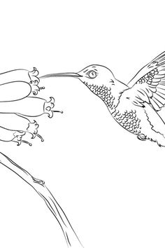 Are you looking for free Cardinal Coloring Pages for free? We are providing free Cardinal Coloring Pages for free to support parenting in this pand Math Shapesmic! #CardinalColoringPages #ColoringPagesCardinal #Cardinal #Coloring #Pages #Worksheets #WorksheetSchools Coloring Pages, Coloring Worksheets, School, Parenting, Math, Free, Quote Coloring Pages, Colouring Sheets, Math Resources