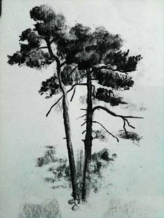 How to Draw Pine Trees, Charcoal Demo Part 1