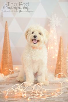 professional photography studio los angeles best family and baby on birthday cakes for dogs in los angeles