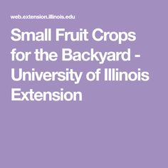 Small Fruit Crops for the Backyard - University of Illinois Extension
