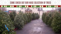 Bring your pet to help pick out the family Christmas Tree! Pet Christmas Presents, Family Christmas, Christmas Tree, Pet Supplements, Your Pet, Country Roads, Pets, Teal Christmas Tree, Xmas Trees