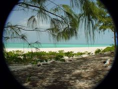 NiceBeach Midway Atoll, Beautiful Places To Live, Islands, Beach, Water, Pictures, Outdoor, Image, Gripe Water