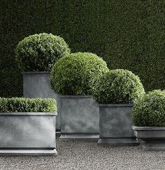 For Concrete Planters for Topiary Nursery (Estate Zinc Tapered Planters, Restoration Hardware) Zinc Planters, Garden Planters, Outdoor Planters, Square Planters, Concrete Planters, Formal Gardens, Outdoor Gardens, Container Plants, Container Gardening