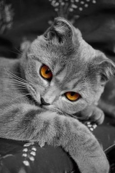 *What pretty eyes on this grey haired kitty
