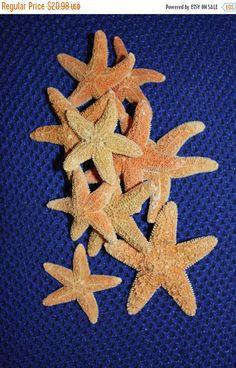ON SALE 10 pcs1 to 2 1/2 SUGAR Starfish free by RUNNINGTIDE