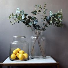 With these wonderfully realistic eucalyptus stem spray, create a simple and elegant display or go maximalist and have three or five in a vase. Dried Flower Bouquet, Dried Flowers, Haut Transparent, Dried Eucalyptus, Tall Glass Vases, Branches, Pots, White Peonies, Pampas Grass