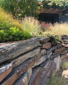 Beautiful dry stone wall, Main Ridge Garden by Fiona Brockhoff Design Shed Landscaping, Native Australians, Dry Stone, Grasses, Maine, Landscape, Rose, Garden, Wall
