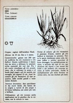 La Bande des Faineantes: Vintage Printable - Iris o Giaggiolo
